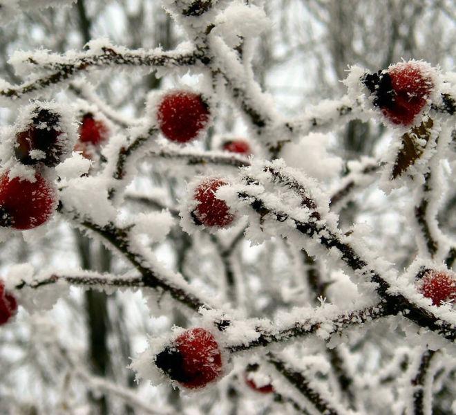 Ferie zimowe w Folwarku Wrzosówka-1
