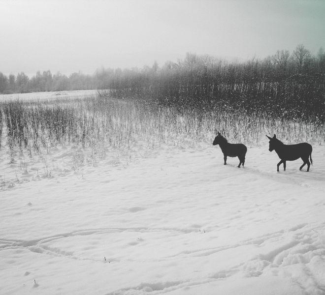 Ferie zimowe w Folwarku Wrzosówka-12