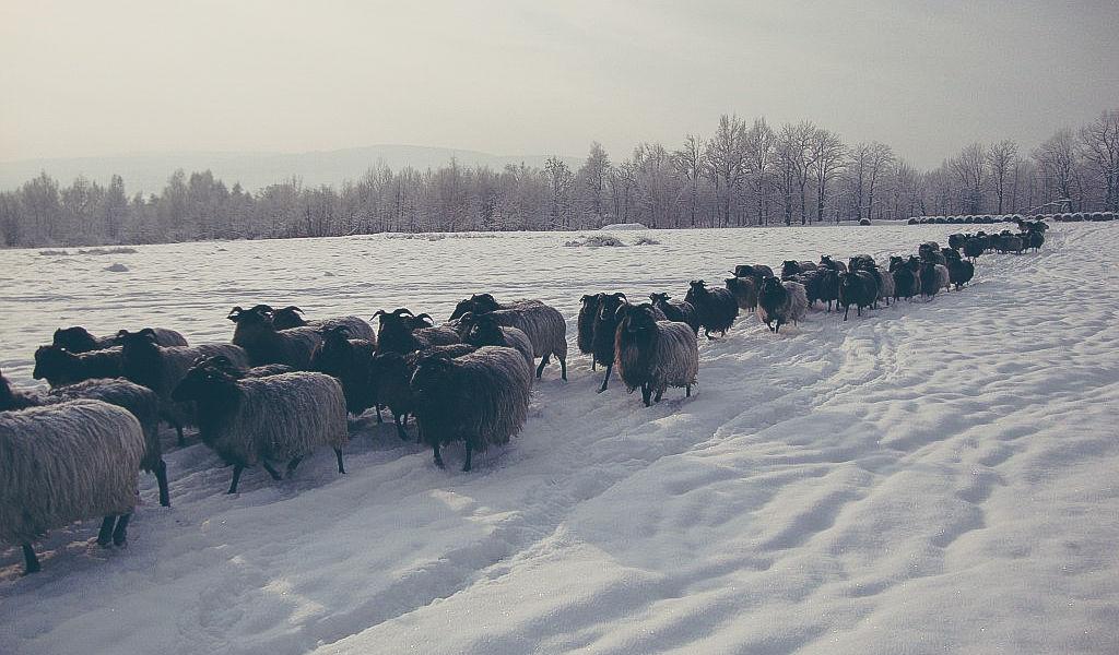 Ferie zimowe w Folwarku Wrzosówka-13