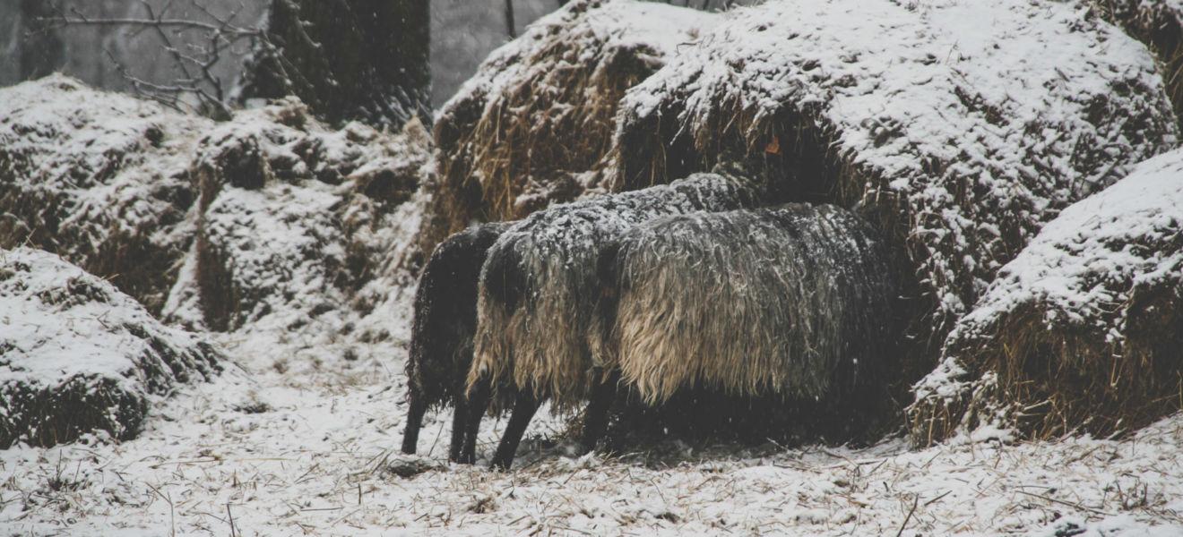Ferie zimowe w Folwarku Wrzosówka-14