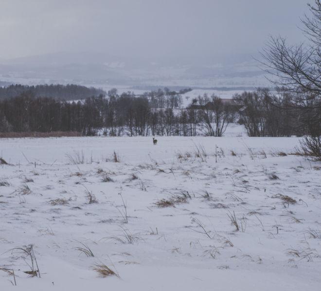 Ferie zimowe w Folwarku Wrzosówka-20